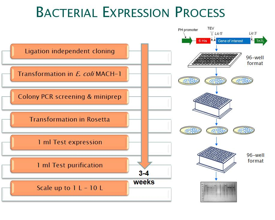 a lab experiment of the induction of protein expression in a prokaryote Publisher of 30 research and review journals including cell, neuron, immunity, current biology, ajhg, and the trends journals.