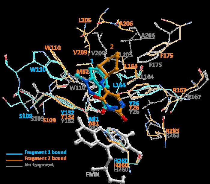 Human Hydroxyacid Oxidase Hao1